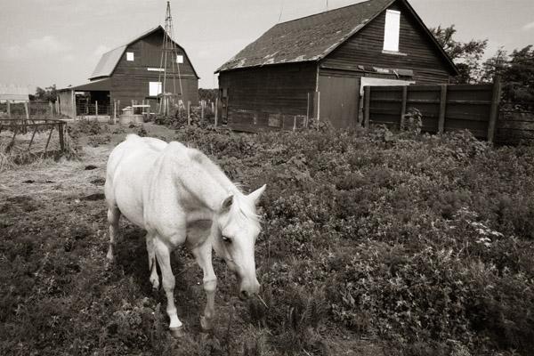 Horse in Navarre barnyard
