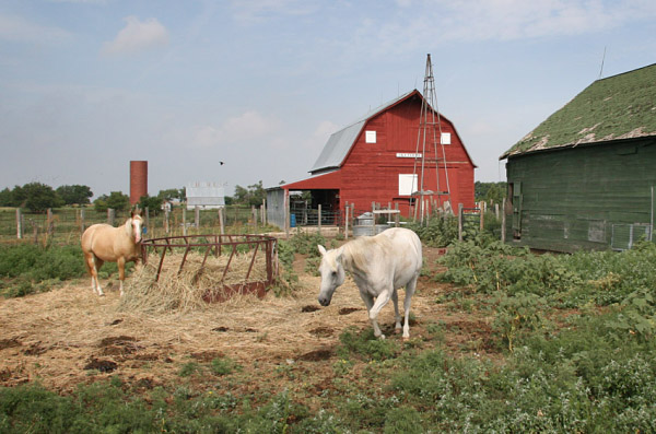 Horses in Navarre barnyard