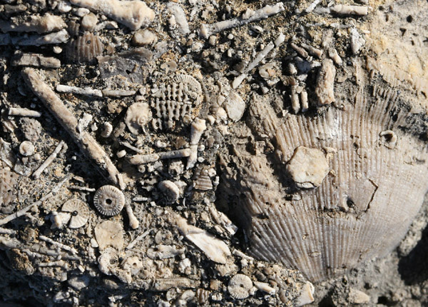 Fossils on the limestone boulders