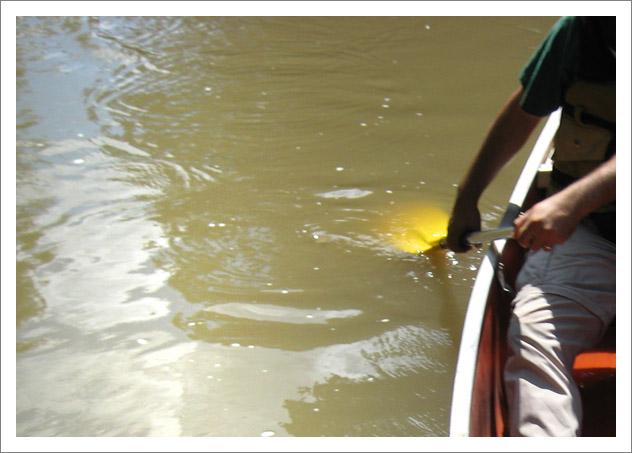 Paddling the canoe